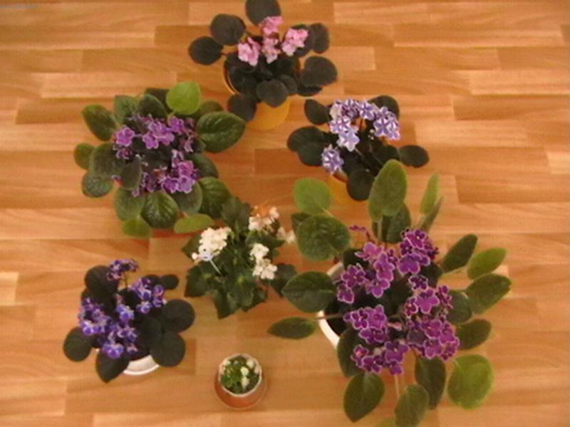 Цветы для счастья в доме  какие комнатные цветы приносят